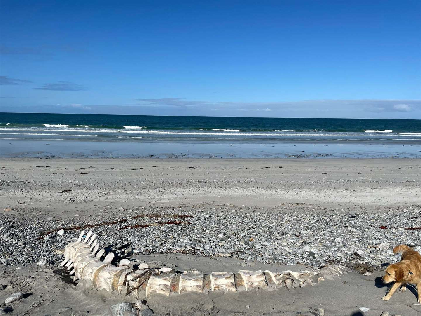 A picture taken by Hannah Burns of the skeleton on the beach at South Uist..