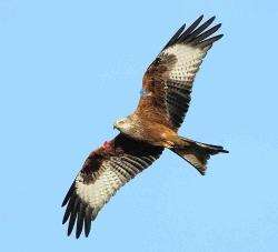 The death of red kites, familiar figures in the skies in Ross-shire, have sparked widespread condemnation